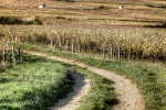 burgundia-tour-photo-12