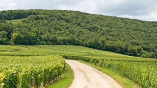 ballade-vignes-2-burgundia-tour