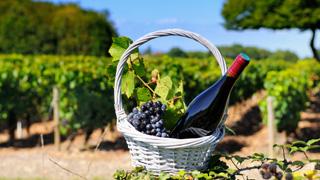 sentiers-du-vin-burgundia-tour