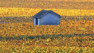 terroirs-climats-1-burgundia-tour