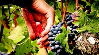 travaux-des-vignes-1-burgundia-tour