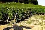 burgundia-tour-photo-25