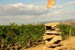 burgundia-tour-photo-29