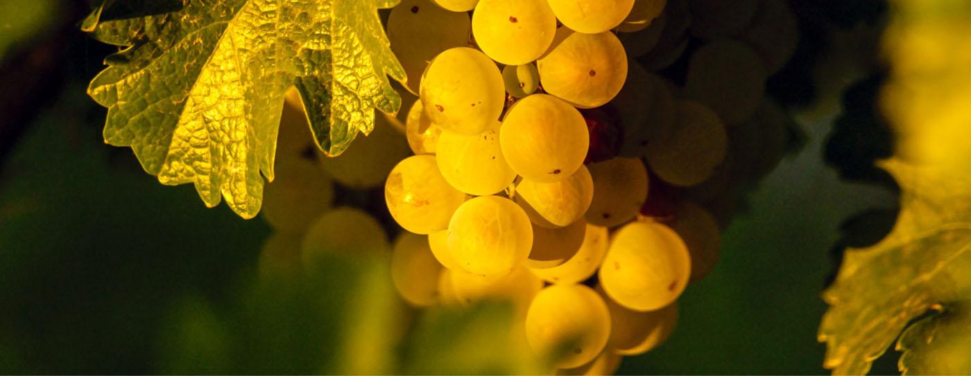 yellow-sapphire-two-day-tour-burgundia-tour
